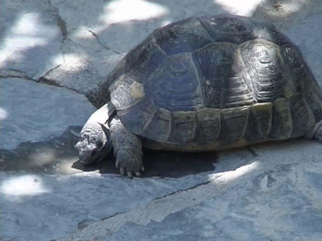 Bodrum Museum Schildkröte