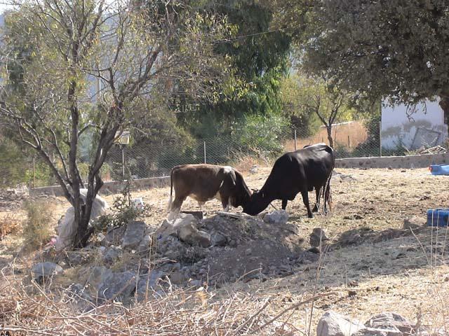 Gölköy Landwirtschaft