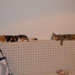 Katzen